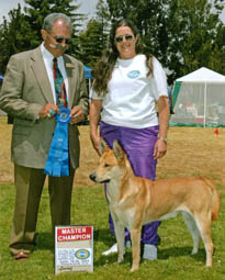 Golden Gate Classic Dog Show